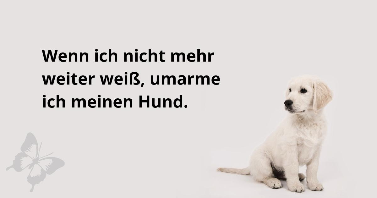 Haustiere helfen bei Depressionen - Kleiner Hund